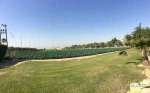 Yasmin Farms Al Wafra in kuwait