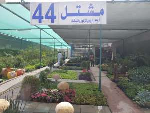 fourty-four-nursery_kuwait