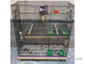 gray-adult-pair-cage-and-breeding-box-for-sale in kuwait