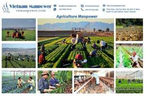 Agriculture Manpower Offer From Vietnam in kuwait
