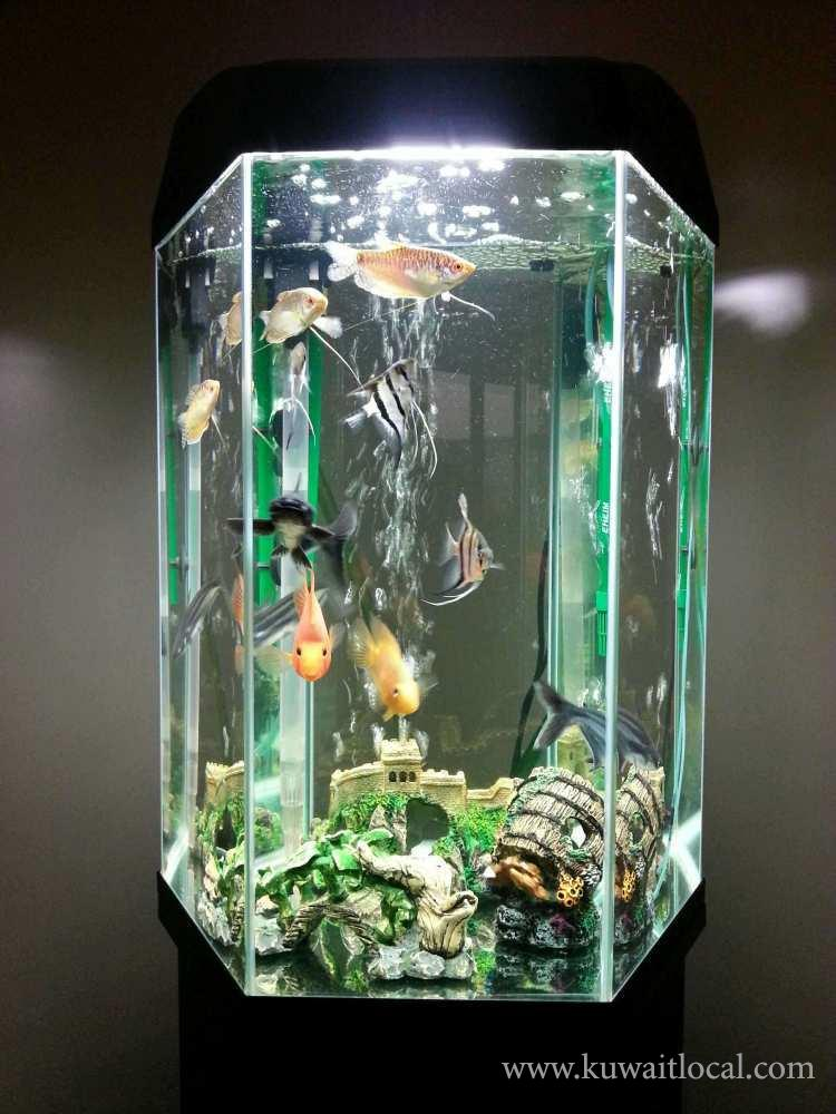 Tropical-Fish-Tank-for-Sale-kuwait