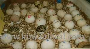 we-are-specialized-in-the-breeding-of-birds-and-parrots-eggs-for-sale in kuwait