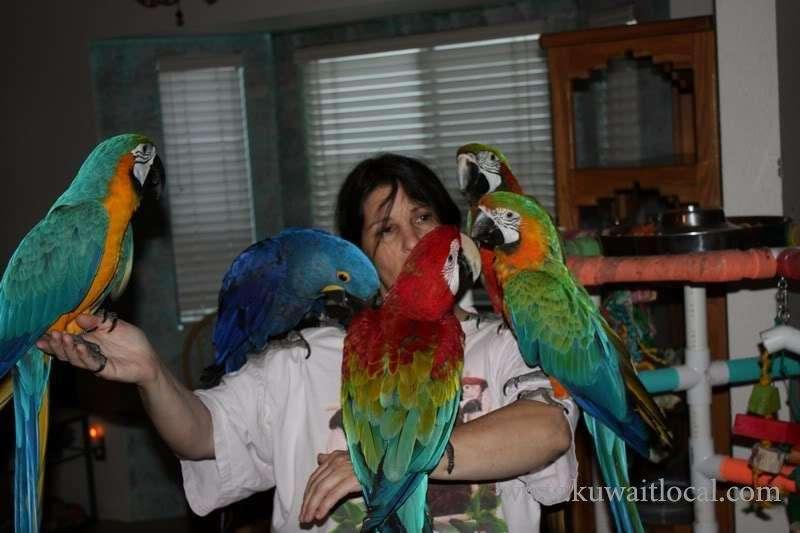 parrots-and-fertile-parrots-eggs-for-sale-kuwait