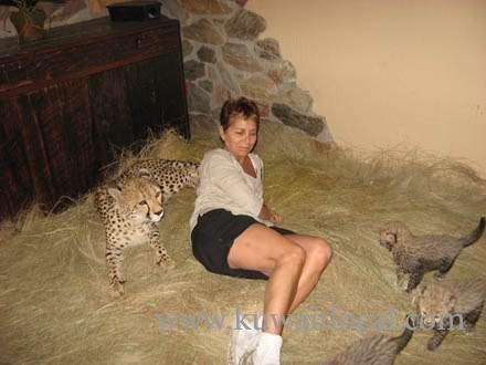 cheetah-cubs-for-sale-kuwait