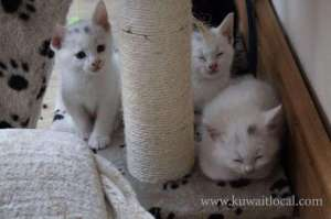 Pets-Animals  in kuwait