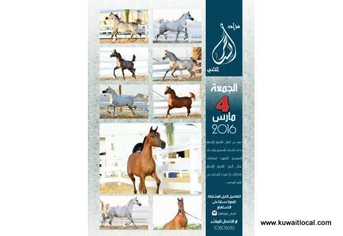 arabian-horse-auction-4-march-2016-kuwait