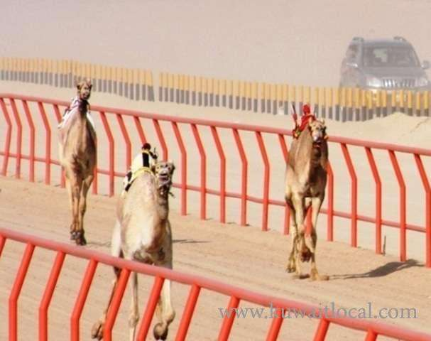 aware-annual-event---camel-races-kuwait