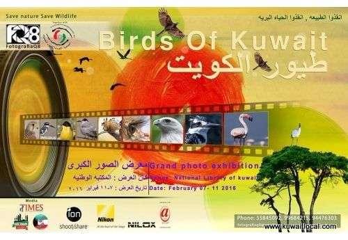 birds-of-kuwait-kuwait