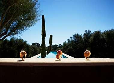 cactus-de-cartier-kuwait