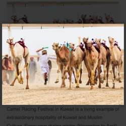camel-racing-need-i-say-more-kuwait