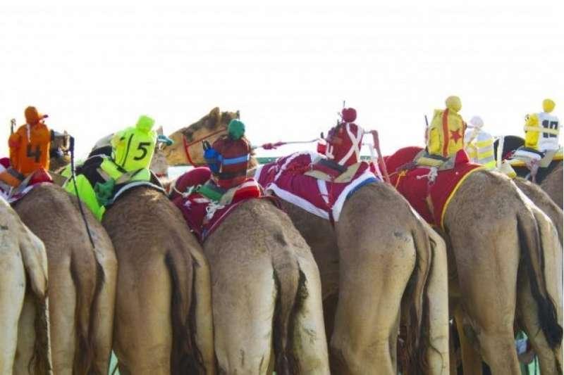 camel-racing-kuwait
