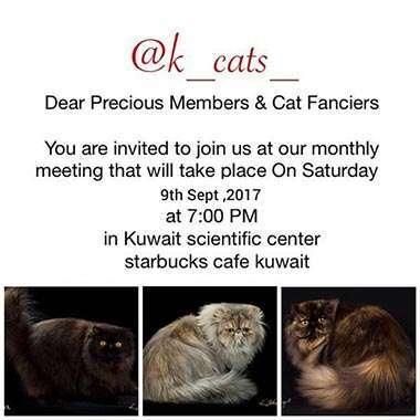 cat-club-meetup-kuwait