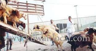 shepherd-lost-his-life-when-his-vehicle-toppled-in-matraba-area_kuwait