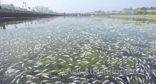 mps-planning-to-convene-special-session-for-discussing-floating-algae-and-dead-fish-in-kuwaiti-bay_kuwait