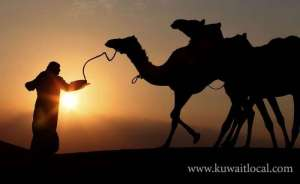 bangladeshi-camel-herder-was-shot-in-his-right-leg-while-he-was-tending-to-camels_kuwait