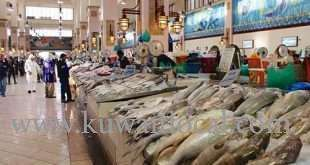 cheating-widespread-at-souk-sharq-fish-auction---chairman_kuwait