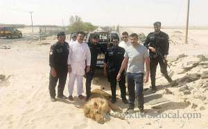 police-arrested-runaway-lion-owner-in-kabad_kuwait