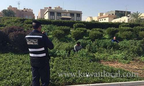 heavy-fines-for-kuwaitis,-asians-caught-uprooting-plants,-trees-to-feed-livestock_kuwait