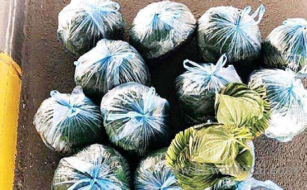 unidentified-individuals-arrested-for-attempting-to-smuggle-130-kilograms-of-betel-leaves_kuwait