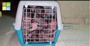 gcc-national-was-detained-for-attempting-to-smuggle-a-pelican-and-20-monkeys_kuwait