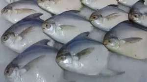 1-kg-of-zubaidi-fish-price-equal-to-the-price-of-a-barrel-of-oil_kuwait
