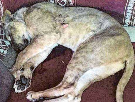a-kuwaiti-killed-by-a-lioness,-when-he-was-attempting-to-train-inside-recreational-facility_kuwait
