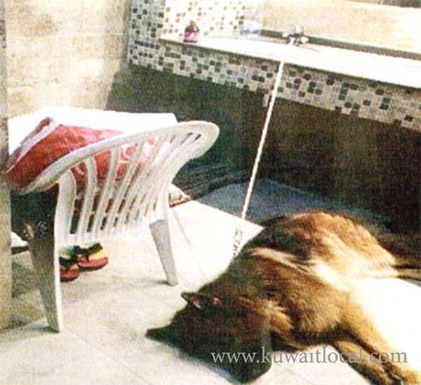 kuwaiti-and-his-dog-found-sleeping-in-the-toilet_kuwait