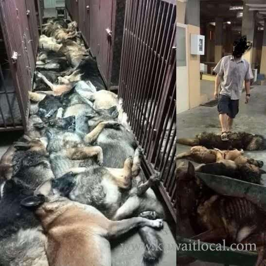 24-dogs-killed-by-workers_kuwait
