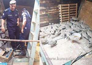 ship-seized-for-carrying-falcons-and-bustards_kuwait
