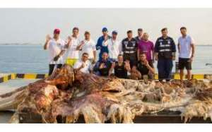 kuwait-dive-team-recovered-on-monday-a-carcass-of-a-dead-whale-in-qaruh-island_kuwait