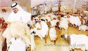 livestock-companies-signed-a-document-to-suspend-import-of-sheep-_kuwait